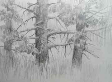 fallriver_trees