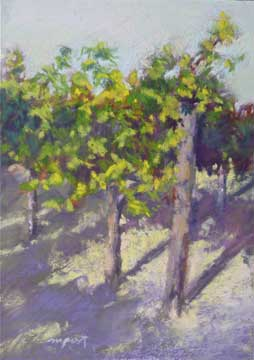 vineyard_shadows